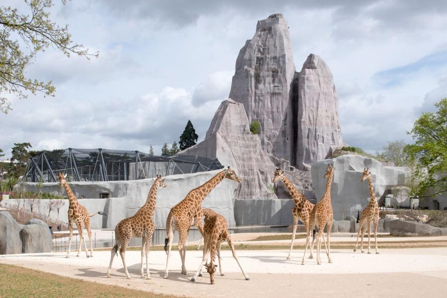 Nouveau Parc Zoologique de Paris (Zoo de Vincennes)
